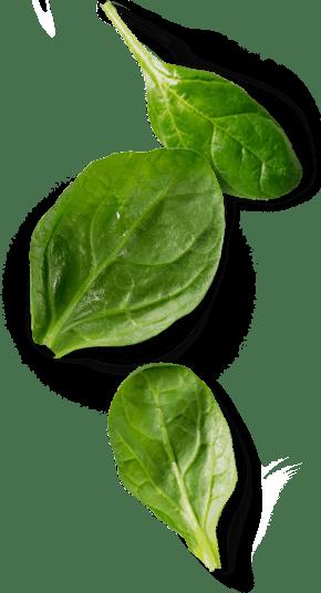 Ayurveda - Gesundheit ist immer individuell